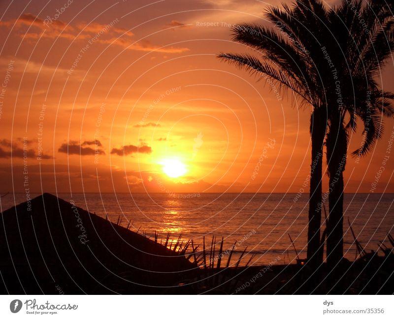 Ein perfekter Sonnenuntergang Spanien Palme Wasser Meer Atlantik Pazifik Wolken Himmel rot orange Leidenschaft schwarz Insel Ferien & Urlaub & Reisen