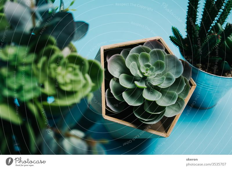 dekorative Elemente für die Inneneinrichtung des Wohnzimmers: umweltfreundliche Holzvase für Plastiksukkulente, Eiseneimer für Kaktus auf farbigem Papieruntergrund. Schutz der Umwelt. Das Konzept der Ökologie