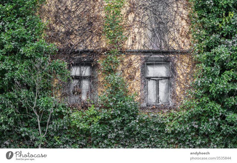 Zwei alte Kastenfenster und eine zugewachsene Fassade Verlassen antik Appartement Architektur Hintergrund gebrochen Gebäude Gebäudeaußenseite gebaute Struktur