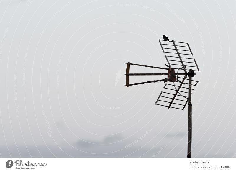 Ein Vogel sitzt auf der analogen Antenne schlechte Nachrichten Brechen Ausstrahlung Rundfunksendung Talkrunde Kommunizieren Mitteilung verbinden verbindend