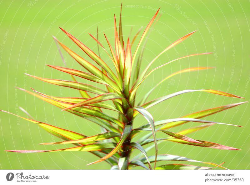 Grüne Pflanze Blume grün