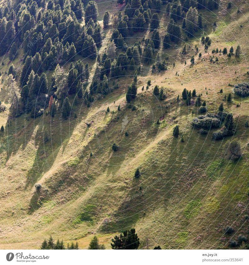 Tannengrün Sommer Berge u. Gebirge Umwelt Natur Landschaft Pflanze Baum Gras Wiese Wald Hügel Alm Weide Bergwiese Waldlichtung Dolomiten Umweltschutz Farbfoto