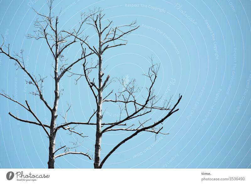 Mahnwache baum kahl himmel sonnenlicht ast zweig umweltverschmutzung baumsterben tod mahnung
