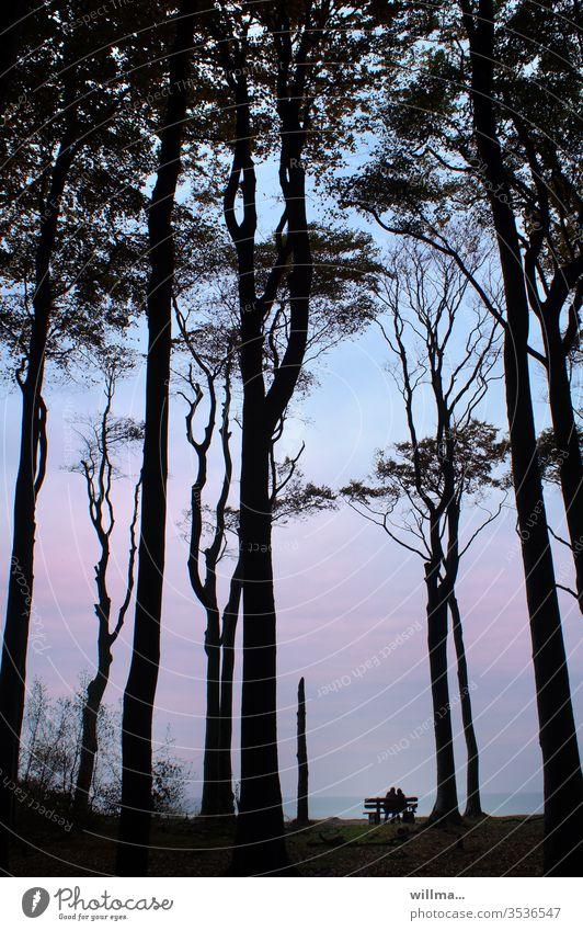 Bankverbindung Paar ausruhen Erholung Bäume Nienhagen Zweisamkeit 2 Menschen Urlaub Meer Ostsee Abend Entspannung Küste Gespensterwald Natur Außenaufnahme