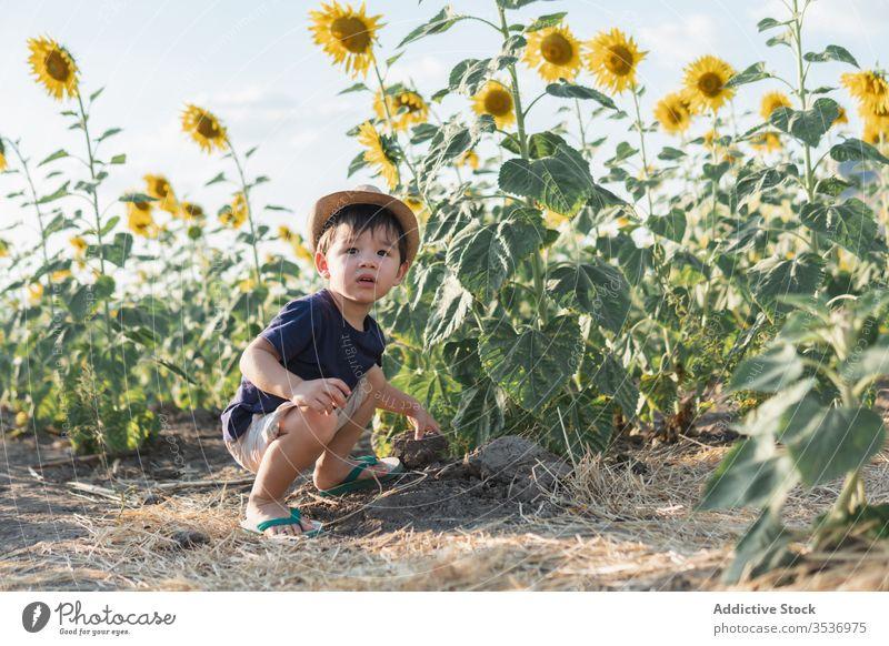 Glücklicher kleiner Junge auf der grünen Wiese heiter Sonnenblume Feld aufgeregt Natur sorgenfrei Hut Kind Freude Kindheit froh positiv Landschaft Freiheit