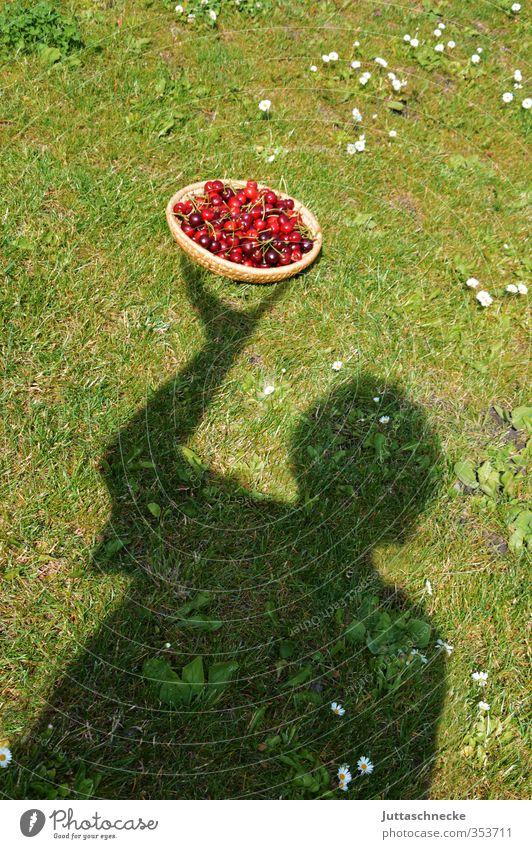 Summer is served Frucht Dessert Kirsche Steinfrüchte Gesunde Ernährung Mensch 1 Sommer Korb Obstkorb tragen Gesundheit saftig süß grün rot Zufriedenheit