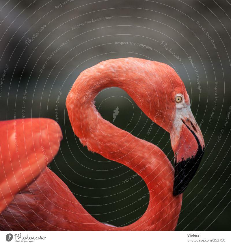 """rotes """"S"""" Tier Vogel Flamingo Tiergesicht Zoo ästhetisch elegant Kitsch Farbfoto Außenaufnahme Textfreiraum oben"""