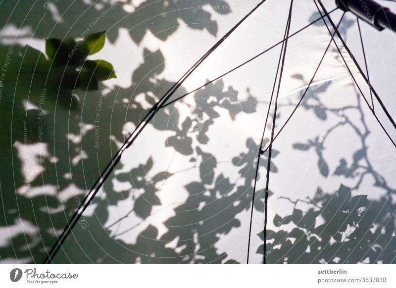 Sonnenschirm sonnenschirm licht sonnenschein schatten blatt baum zweig ast gebüsch garten kleingarten schrebergarten frühling frühjahr sommer ferien ruhe