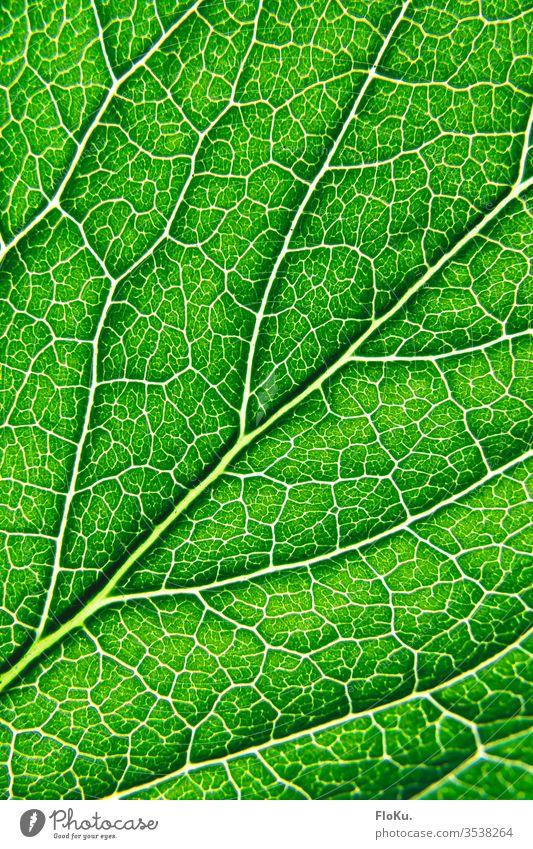Nahaufnahme der Struktur eines Blattes grün Pflanze Gefäße Makroaufnahme Blattadern Photosynthese Sträucher Strukturen & Formen Natur Ecke Umweltschutz Ordnung