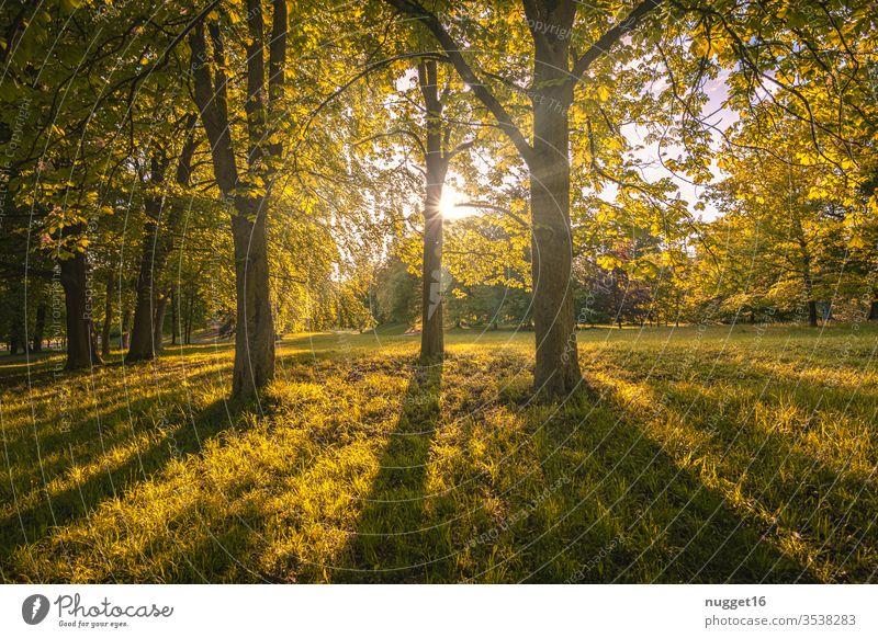 Wald im Gegenlicht Baum Natur Herbst Blatt Außenaufnahme Farbfoto Tag Pflanze Menschenleer Umwelt natürlich Landschaft braun grün Licht Sonnenlicht mehrfarbig