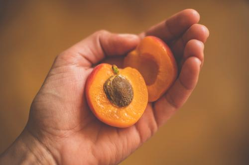 Zwei Hälften einer Aprikose mit Kern in einer Hand aufgeschnitten lecker fruchtig orange Frucht halten Lebensmittel süß retro vintage Innenaufnahme Bioprodukte