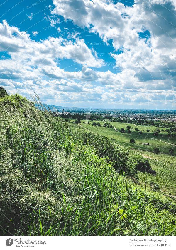 Wolken spenden Schatten in den Weinbergen Wolkenhimmel Schattenspiel Natur grün Schriesheim Horizont Baden-Württemberg Deutschland Europa Weinbau Landschaft