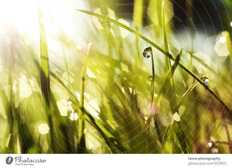 Morgenstund... Sommer Sonne Wassertropfen Sonnenlicht Frühling Gras Garten Wiese frisch nass grün Tau Halm Reflexion & Spiegelung Farbfoto Außenaufnahme