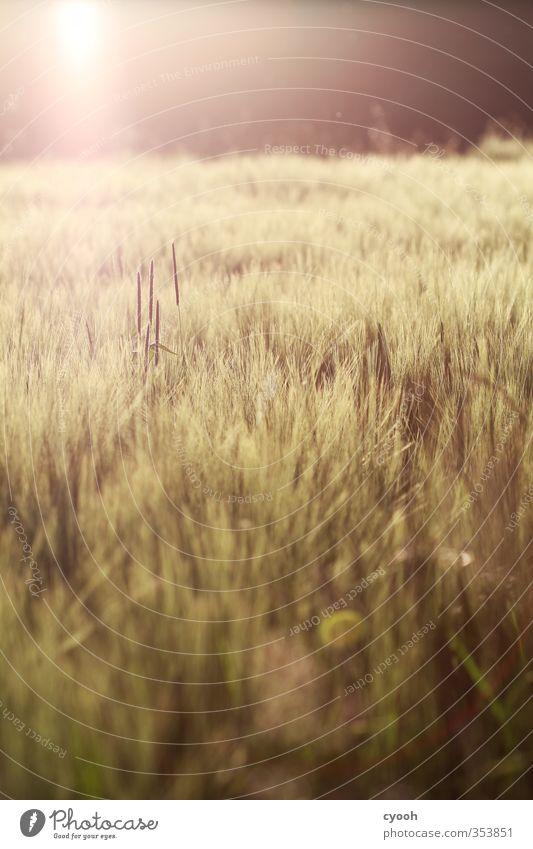 Sommerwärme Natur Pflanze Landschaft gelb Wärme Herbst hell Horizont Stimmung braun Feld gold Zufriedenheit leuchten Schönes Wetter