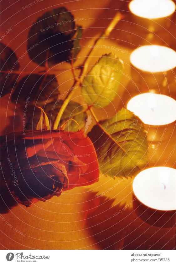 Stimmung Rose-Lichter-Langzeitbelichtung -Wachs