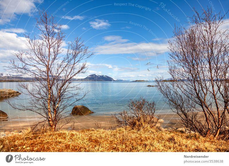 Frühling am Fjord insel küste strand lofoten meer wasser fjord findling felsen bäume birken gras schären norwegen ozean stimmung steine szene aussicht berge