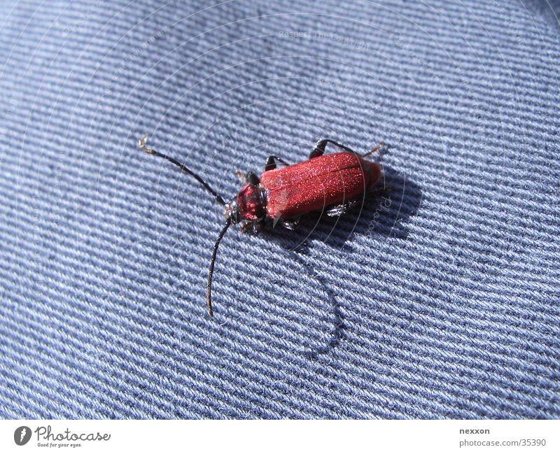 red bug blau rot Insekt Käfer Schiffsbug