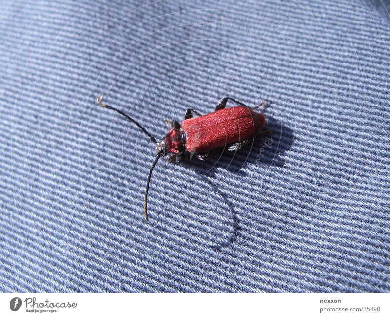 red bug rot Makroaufnahme Insekt Käfer Schiffsbug blau schillernder Käfer Nahaufnahme beetle