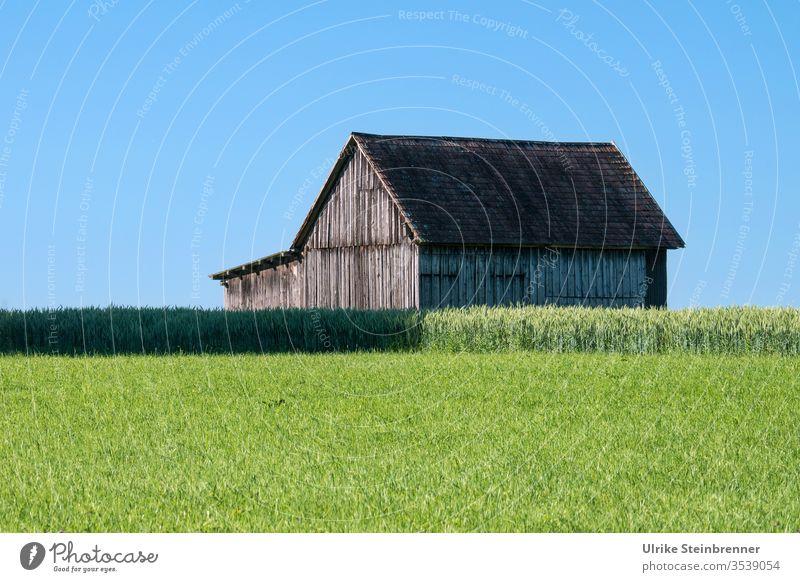 Holzscheune hinter grüner Wiese und vor blauem Himmel Scheune Holzhaus Schuppen Feld Acker Getreide Landwirtschaft Weide Gras Sommer Landschaft Ackerbau