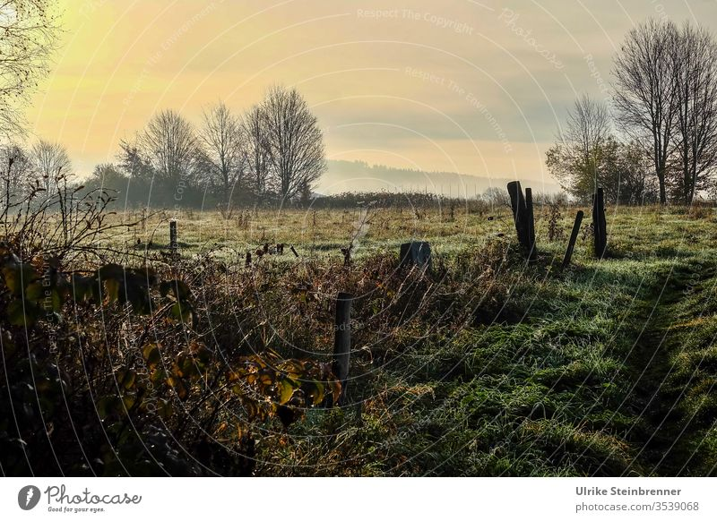 Herbstmorgen im Hochmoor Herbststimmung Schwenninger Moos Bäume Wiese Zaun Büsche Natur Landschaft Gras Umwelt Naturschutzgebiet Jahreszeiten Morgen