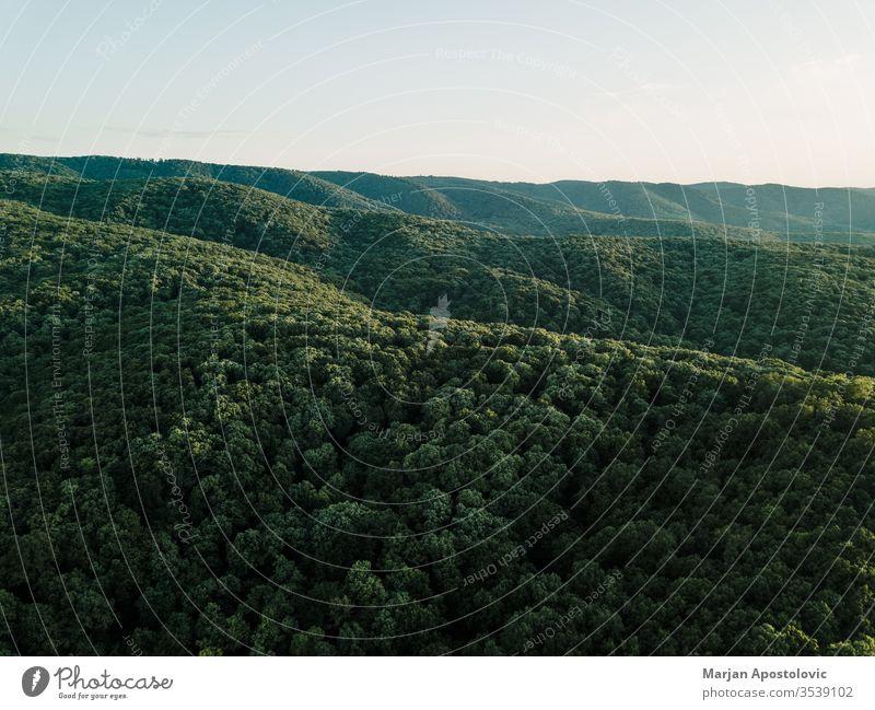 Blick auf den schönen Wald in den Bergen oben Antenne Hintergrund Schönheit Buchsbaum Erhaltung Landschaft Morgendämmerung Tag Abenddämmerung Ökologie Umwelt