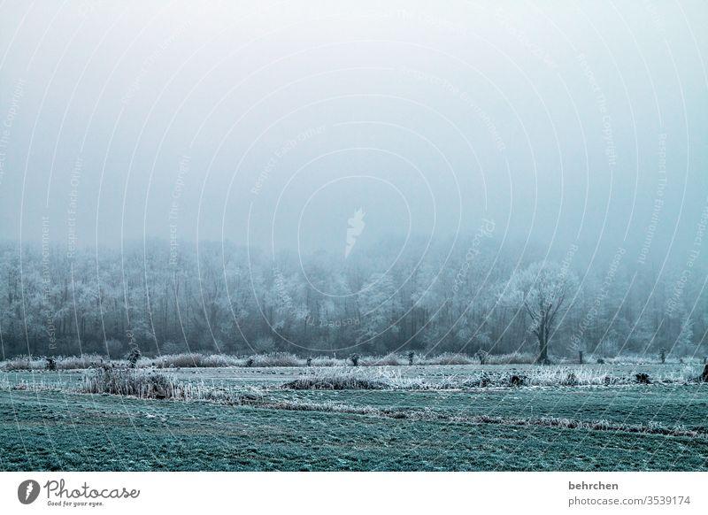 einsamkeit Winterwald Winterstimmung Acker Wintertag Winterspaziergang geheimnisvoll Landwirtschaft Märchenhaft Menschenleer Baum Winterlandschaft Herbst Eis