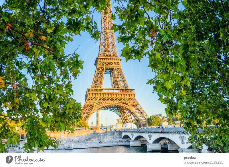 Eiffelturm, Paris. Frankreich-Ansicht durch Ahornblatt antik Architektur schön blau Brücke Gebäude Kapital Großstadt Stadtbild Konstruktion Morgendämmerung