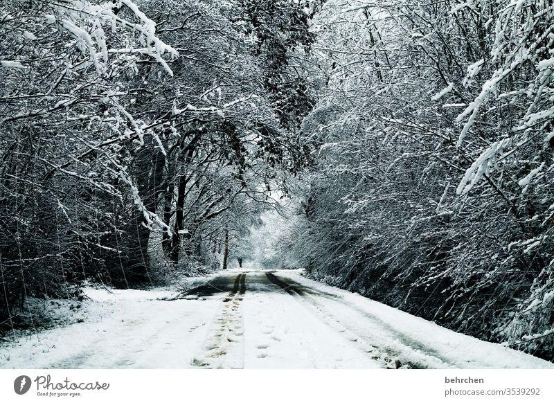winterweg Winter Wald Schnee Bäume Landschaft Frost Natur Umwelt Winterlandschaft kalt Kälte frieren gefroren Außenaufnahme Baum Menschenleer Raureif