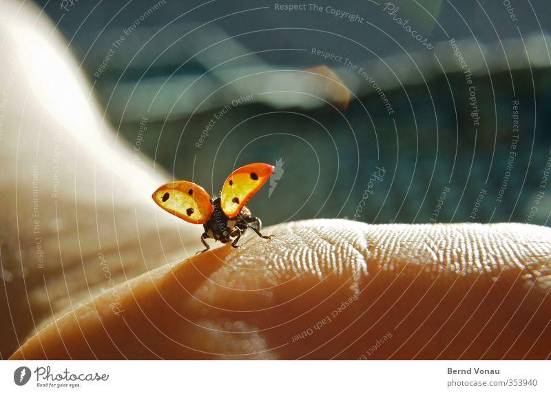 ...und Abflug! Arme Hand Marienkäfer 1 Tier berühren fliegen sitzen frei niedlich braun rot Frühlingsgefühle Freiheit Natur Flucht Abheben Gegenlicht