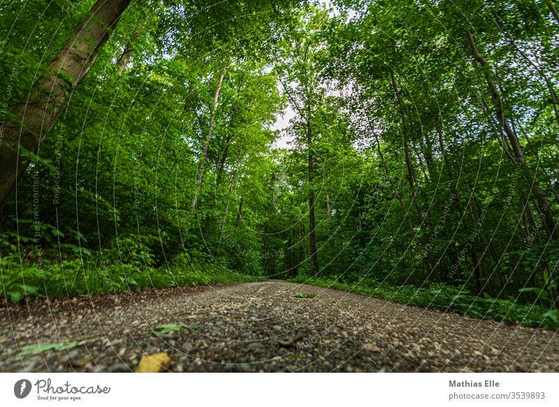 Waldweg im dichten Grün grün Weg Kiesel Bäume Laub Steine Pfad Straße Wandern laufen joggen Waldspaziergang sparziergang spazierengehen Außenaufnahme Natur
