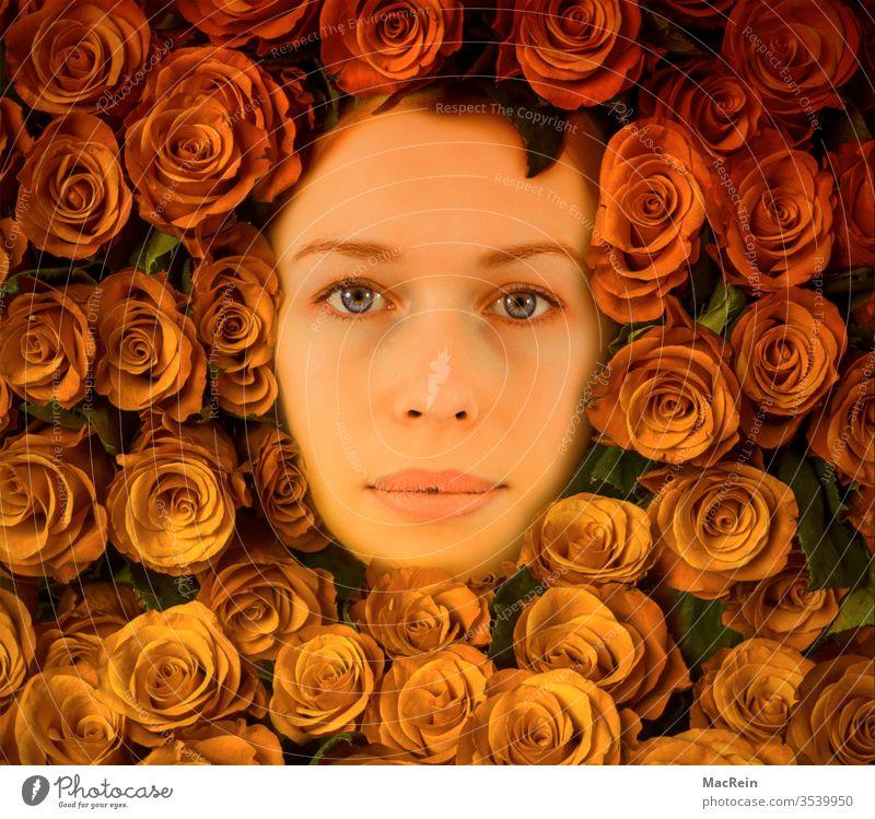 In Rosen gebettet portrait portraitfoto gesicht frau rose rosen rosenstrauß rosenblätter Rosenblüte Rosengewächse blumen erwachsene textfreiraum