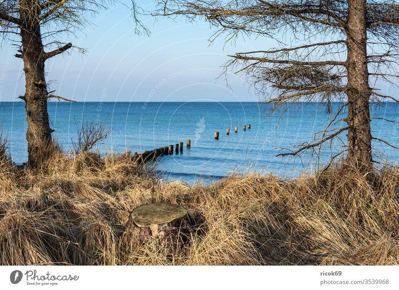Strand an der Küste der Ostsee bei Graal Müritz Ostseeküste Meer Baum Torfbrücke Düne Dünengras Himmel Wolken blau Mecklenburg-Vorpommern Landschaft Natur