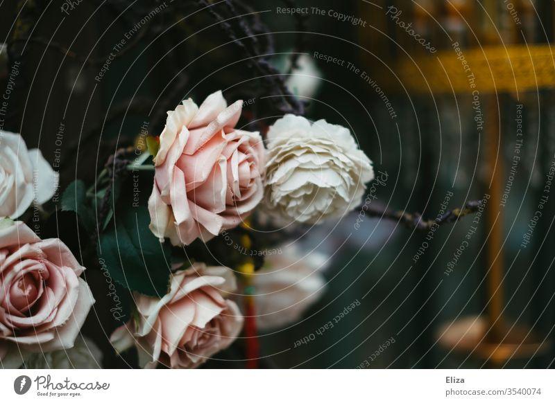 Hübsche zartrosa und weiße Rosen vor einem unscharfen bläulichen Hintergrund Dekoration & Verzierung Blume blüten Strauch kühl Blühend Blüte Pflanze schön