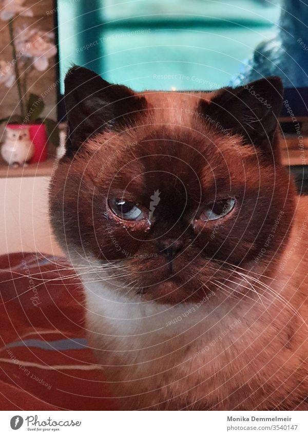 süsses Kätzchen Katze Tier Haustier Farbfoto Tierporträt niedlich Tiergesicht Schnurrhaar Katzenkopf Hauskatze Blick Blick in die Kamera Fell Katzenauge schön