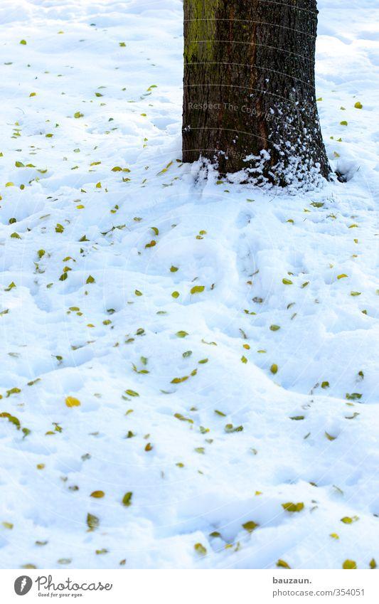 schneebaum. Garten Gartenarbeit Natur Landschaft Winter Klima Schnee Baum Blatt Park Wiese Platz Wege & Pfade Holz fallen kalt braun grün weiß Leben Verfall