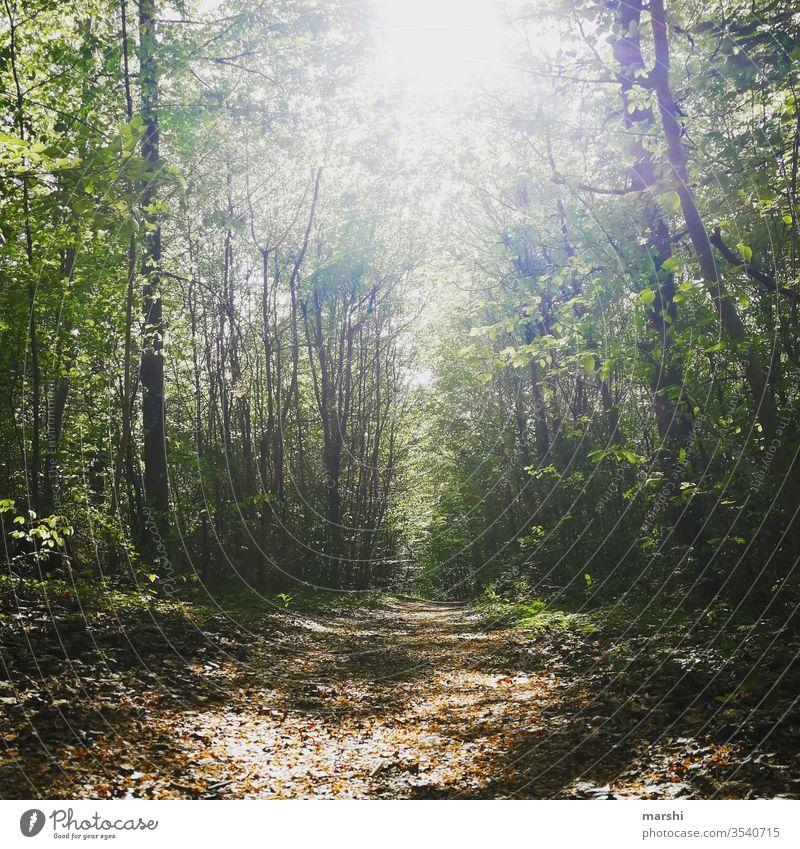 Waldbaden wald waldbaden bäume natur Naturliebe Naturerlebnis baum erholung freizeit erleben ruhe auszeit flora weg wandern Wanderausflug Wanderung