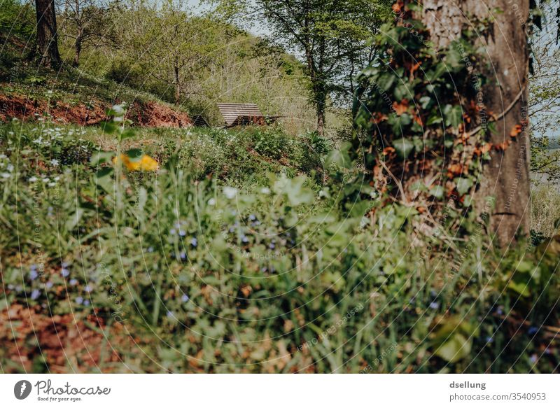 Ein idyllischer Platz zum Ausruhen im Grünen Hang Hänge Ausblick Aussicht grün Bäume Wälder Pünderich Ferien & Urlaub & Reisen Weinbau Tourismus Weinberg Natur