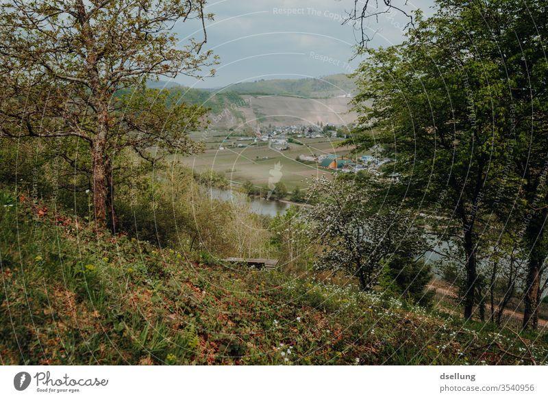 Ausblick auf die Mosel und grüne Hänge und blühenden Bäumen Moseltal Hang Felsen Panorama Aussicht Wälder Reflexion & Spiegelung Pünderich
