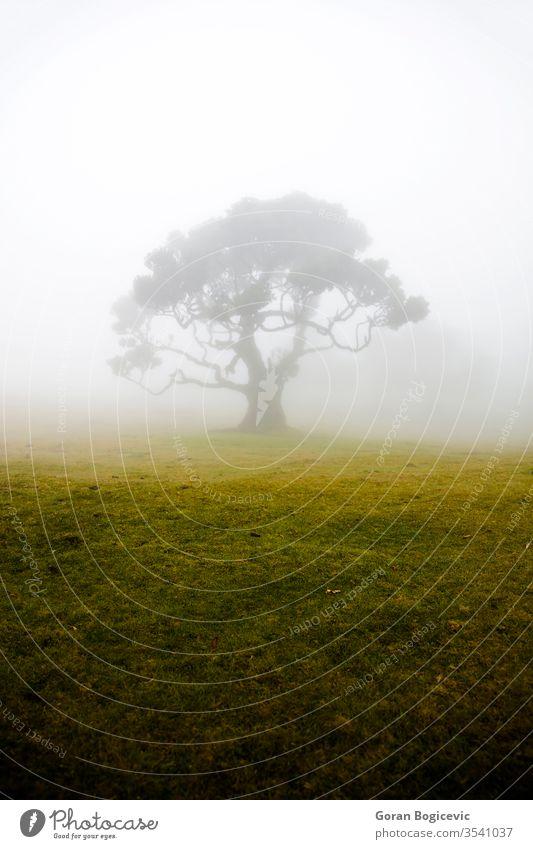Mystischer Fanal-Laurisilva-Wald auf der Insel Madeira, Portugal fanal Europa Natur reisen Landschaft malerisch natürlich Sommer Urlaub im Freien Hügel