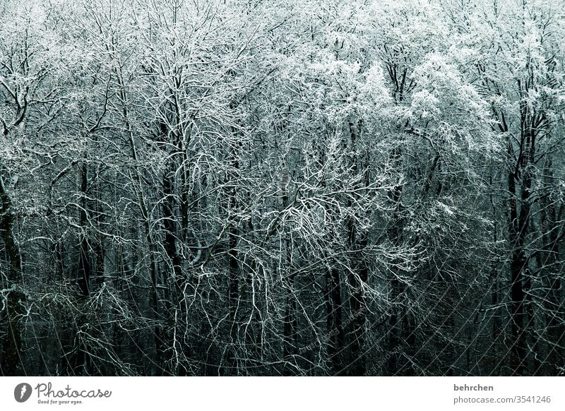 verzweigt idyllisch verträumt schön Schneelandschaft Winterspaziergang Wintertag Winterstimmung Winterwald geheimnisvoll Märchenhaft Märchenwald Deutschland