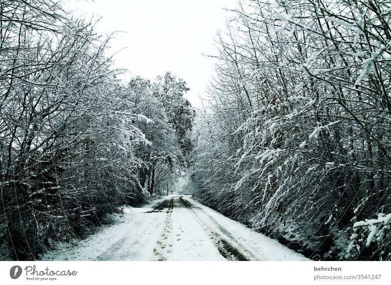 rückblick Wege & Pfade Klima Natur Umwelt Winter ruhig Schneefall Landschaft Frost Bäume Winterlandschaft kalt Kälte frieren Jahreszeiten Wetter stille Idylle