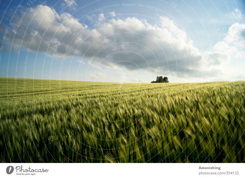 Feld I Umwelt Natur Landschaft Pflanze Himmel Wolken Horizont Frühling Wetter Schönes Wetter Wärme Baum Blatt Nutzpflanze Hügel blau gelb grün weiß