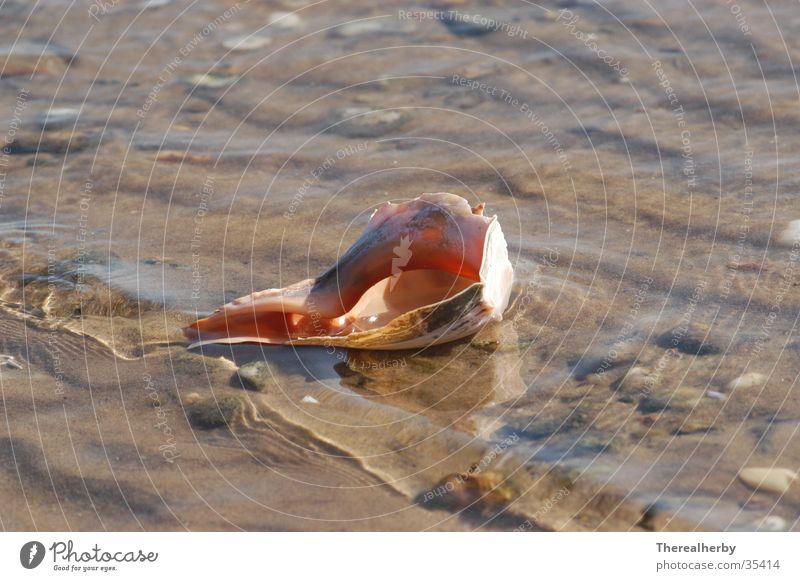 Muschel am Strand Meer