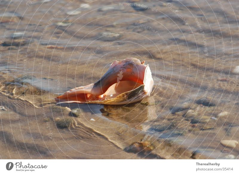 Muschel am Strand Meer Strand Muschel