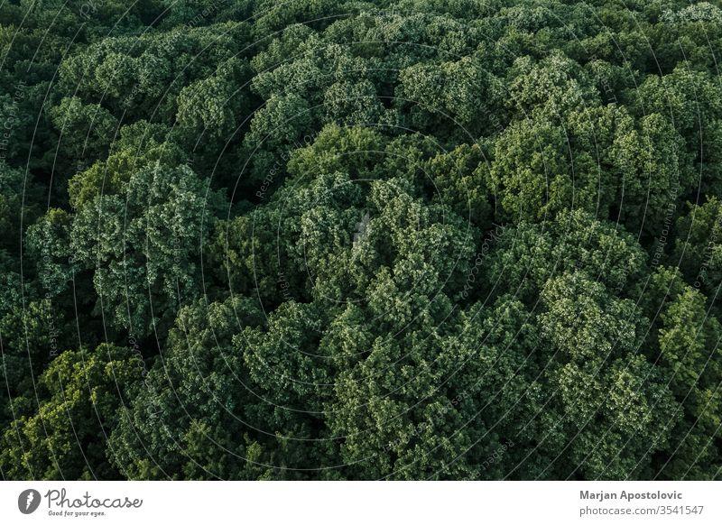 Luftaufnahme eines üppig grünen Waldes in den Bergen oben abstrakt Antenne Gegend Hintergrund schön Buchsbaum Niederlassungen Land Landschaft Öko Ökologie