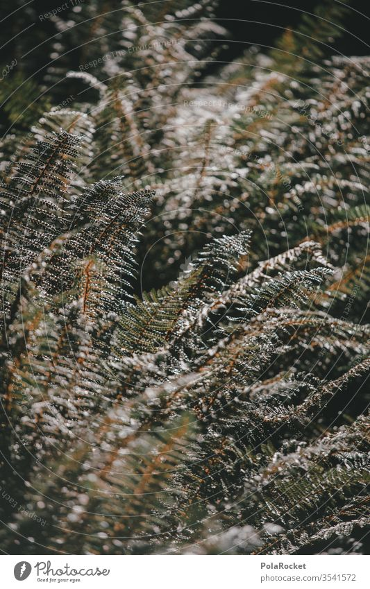 #As# FarnFarnFarn Farnblatt Farne Farnblätter farnwuchs farntrieb Neuseeland Neuseeland Landschaft Natur