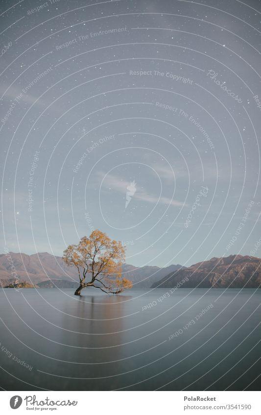 #As# Baum in See Wanaka Wanaka Tree Langzeitbelichtung Wasseroberfläche Neuseeland Neuseeland Landschaft Sehenswürdigkeit Natur Außenaufnahme Farbfoto