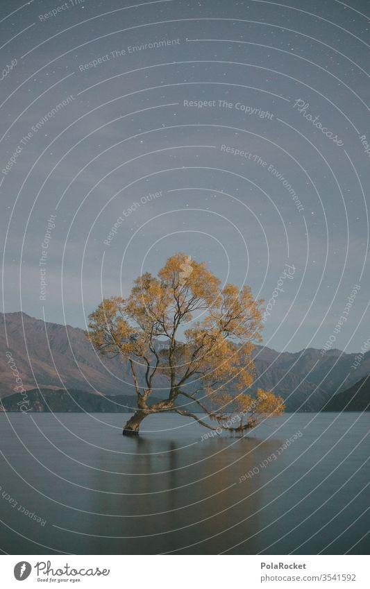 #As# Wanaka Stars Neuseeland Neuseeland Landschaft Natur Farbfoto Außenaufnahme Berge u. Gebirge Ferien & Urlaub & Reisen Küste Wasser Menschenleer See Seeufer
