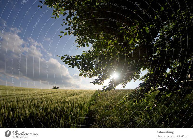Feld IV Umwelt Natur Landschaft Pflanze Himmel Wolken Sonne Sonnenaufgang Sonnenuntergang Sonnenlicht Frühling Wetter Schönes Wetter Wärme Baum Gras Blatt
