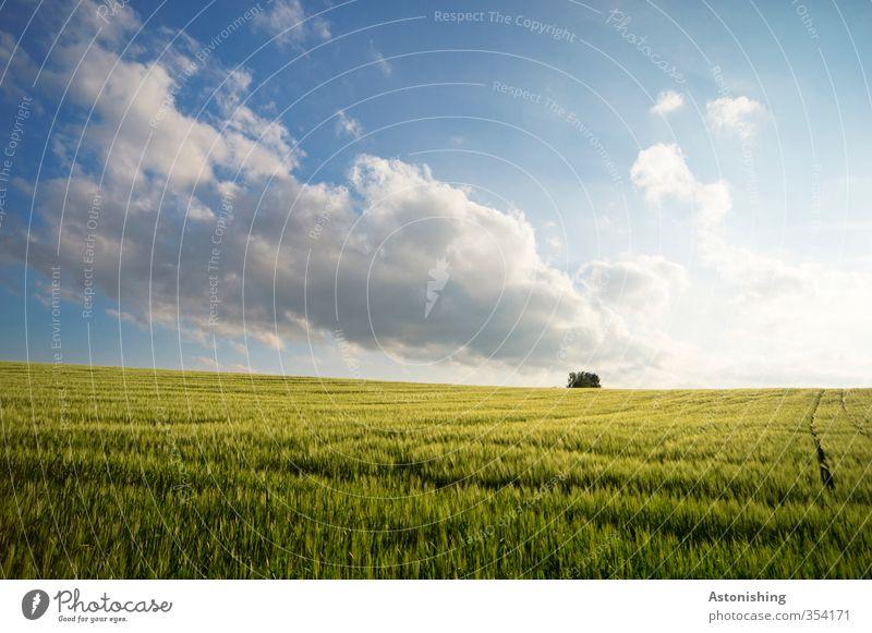 Feld II Umwelt Natur Landschaft Pflanze Luft Himmel Wolken Horizont Frühling Wetter Schönes Wetter Baum Gras Blatt Nutzpflanze hell blau gelb grün